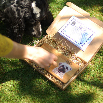Dog Lover Subscription Box